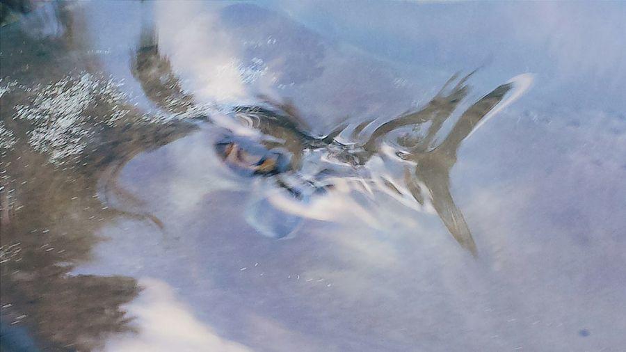 Maximum Closeness Eye Of A Predator Shark Attack Shark Eye Shark Week Shark Upclose Shark Tank Predator