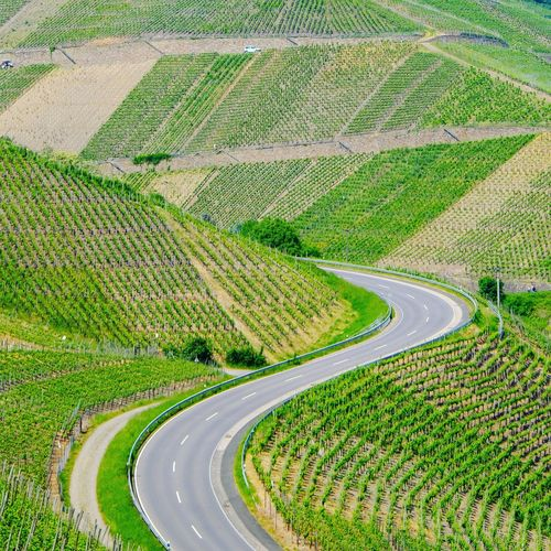 Road through vineyards.