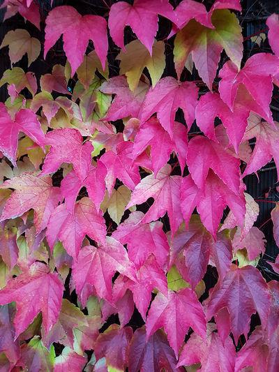 Autumn 2016