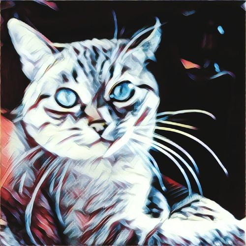 Domestic Cat Close-up No People Indoors  Animal Themes Mammal Pets Day Outdoors Drawing Drawing - Art Product Art, Drawing, Creativity Art And Craft Art Artwork Painting The Painter Backgrounds Cat Animal Eye Whisker Domestic Animals Portrait One Animal Looking At Camera Yellow Eyes
