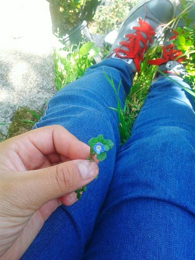 Nature On Your Doorstep Algo Sencillo Que Poco Notamos Descansando Entre Flores Pequeños Detalles De La Vida :)