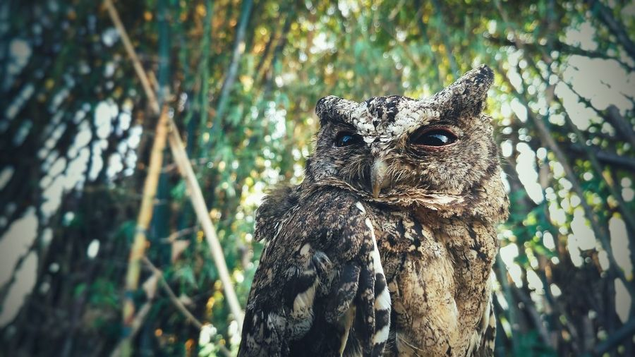 Owl Owl Art Animal Wildlife One Animal Animals In The Wild Nature Animal Pattern Animal Themes Outdoors Forest Portrait No People Beauty In Nature Close-up Beauty Backgrounds EyeEmNewHere Focus On Foreground Full Length Landscape Beauty In Nature Nature Eye Animals In The Wild EyeEm Selects