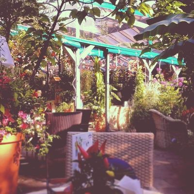 Magiczny Ogrod Kawiarnia Garden cafe awesome beautiful summer poznan
