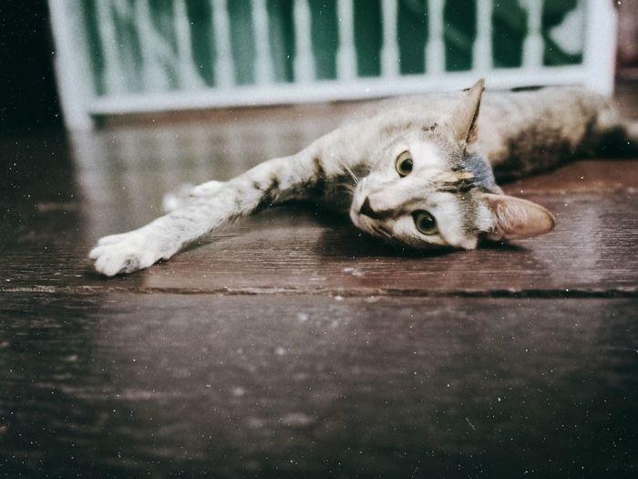 Portrait of a dog lying down on floor