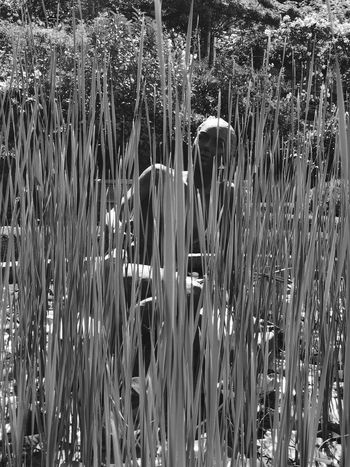 Sculpture behind Gras Sculpture Garden Sculpture Bnw Botanical Garden Italy Meran Merano IPhoneX IPhoneography IPhoneArtism Blackandwhite IPhone monochrome photography Blackandwhite Photography Day Growth Plant Backgrounds Nature No People Full Frame