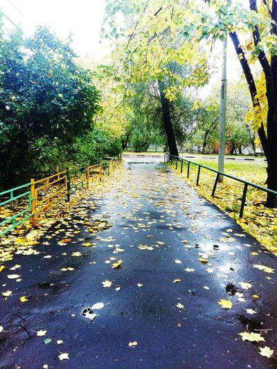 С утра проснувшись я, Иду гулять, По солнечным аллеям, И вижу тропы золотые Вдыхая цвет и тени. Tree Autumn Season  Change The Way Forward Road Leaves Park - Man Made Space Nature