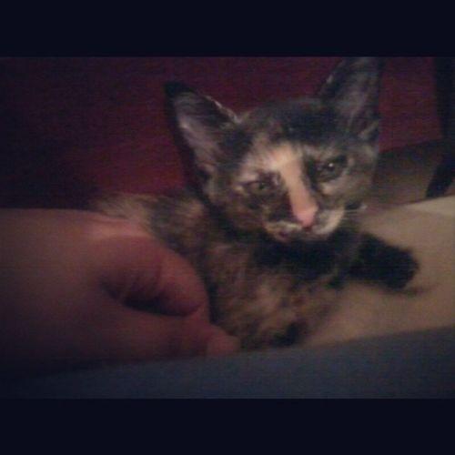 Olha quem me assustou quando tirei o travesseiro pra dormir, Mona <3 Cats Babycats Animals
