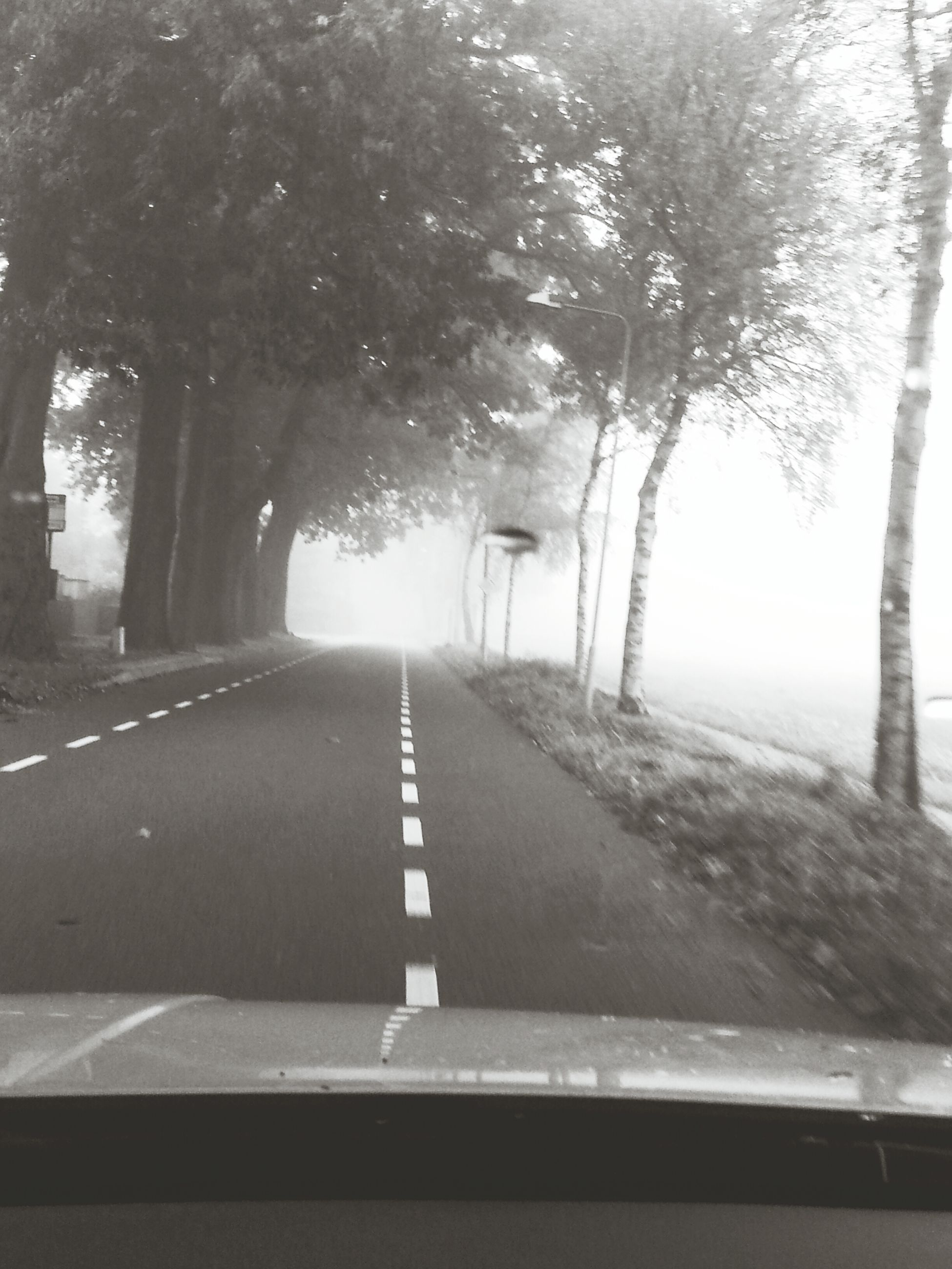 the way forward, transportation, diminishing perspective, tree, road, vanishing point, road marking, empty road, country road, empty, nature, long, car, mode of transport, treelined, day, no people, street, growth, sky