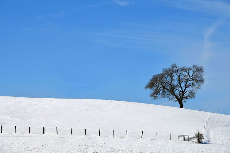 A lone tree on