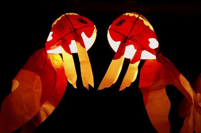 暗闇で泳ぐ金魚 The goldfish swum by darkness. Hello World Tokyo,Japan Light And Shadow Goldfish Meguro ちょうちん