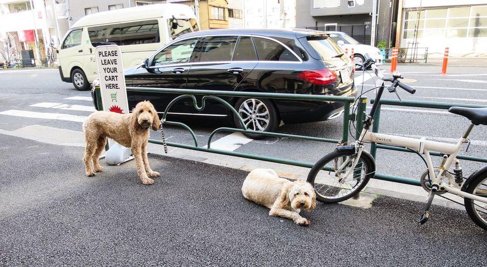Dogs Dog Life at Minatoku in Tokyo Japan