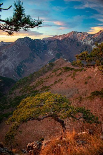 Magical sunset. Tree Mountain Sunset Sky Landscape Mountain Range Mountain Peak Valley Pine Tree Pine Woodland Mountain Ridge Natural Landmark Evergreen Tree