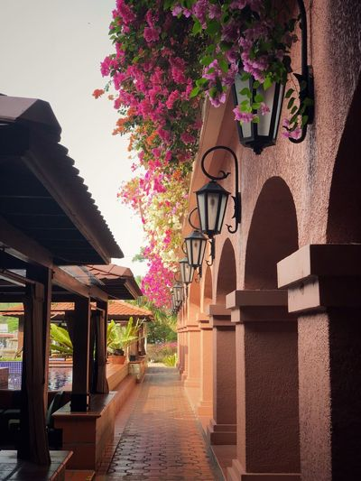 Best Hotel in Malacca , Malaysia Holiday Traveling Travel Malacca Malaysia Resort Hotel Hotels And Resorts Holiday Vacations Vacation Built Structure Architecture Building Exterior Tree Arch Plant The Way Forward Outdoors Flower Nature First Eyeem Photo