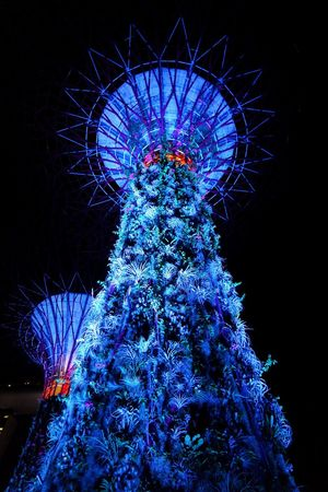Supertrees at GBTB Hanging Out Check This Out Taking Photos Hello World Enjoying Life Supertrees Gardens By The Bay Singapore Amazing View Amazing Architecture Amazing_captures SuperTree Garden Architecture Nightphotography Lights Nature Nature Photography Naturelovers Tree Porn Tree Silhouette Treelovers