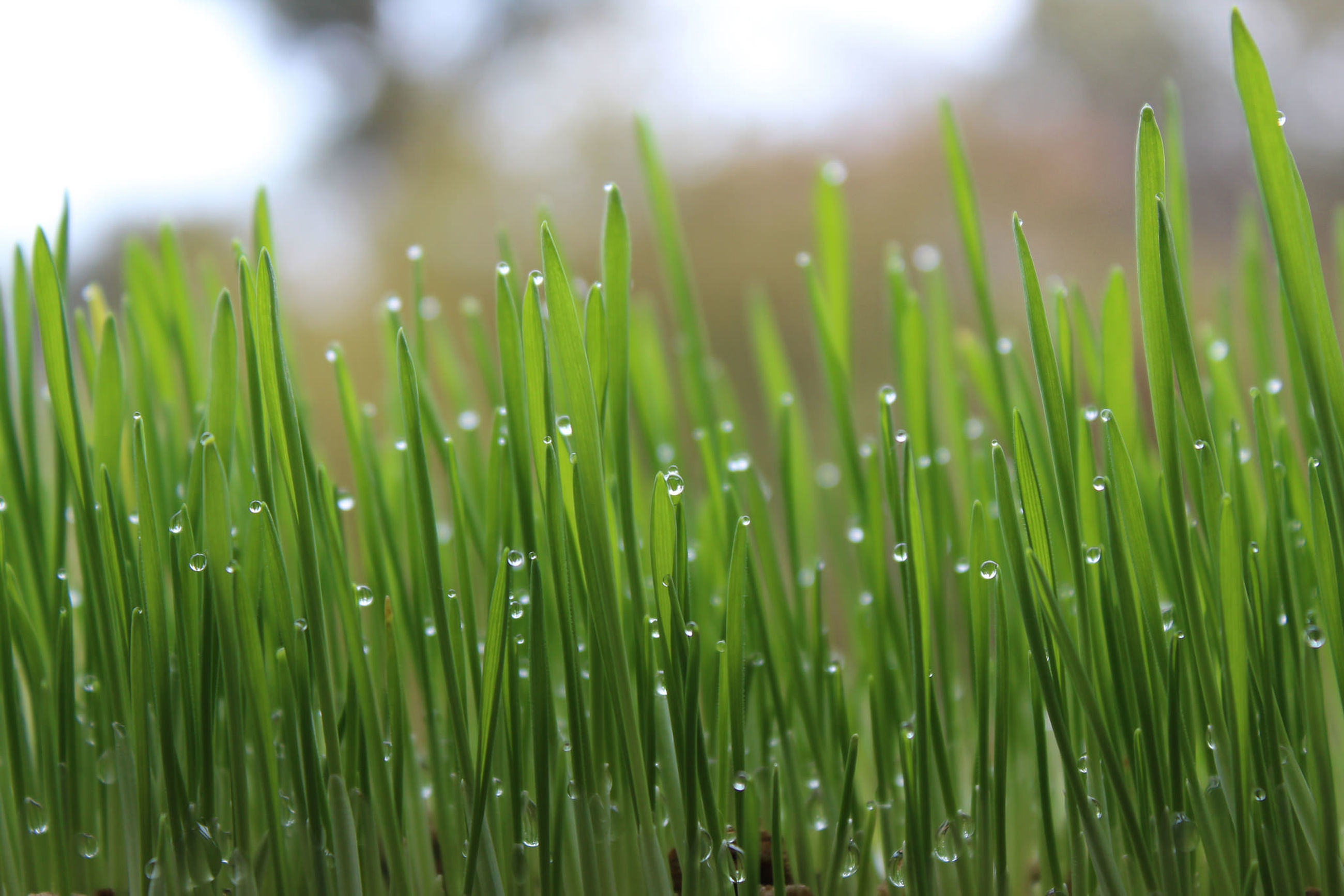 green color, growth, nature, drop, no people, close-up, beauty in nature, day, water, outdoors, grass, freshness