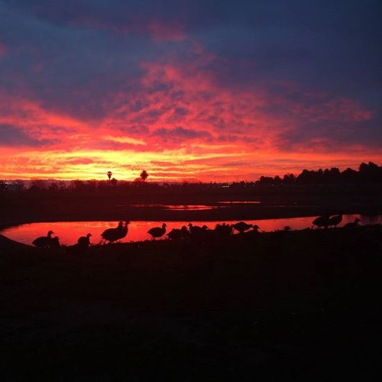 Morning Sunrise Clouds Birds Water Pond Reflection Goodmorning Am RedClouds  Nature Winter