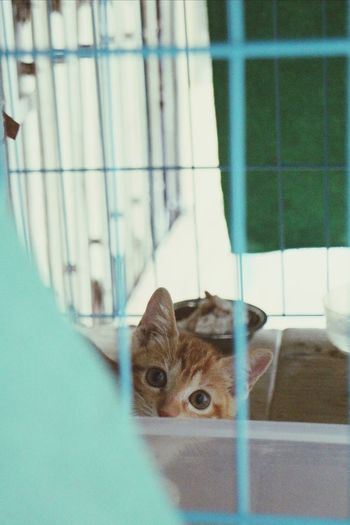 Neighbor Lovely Cat