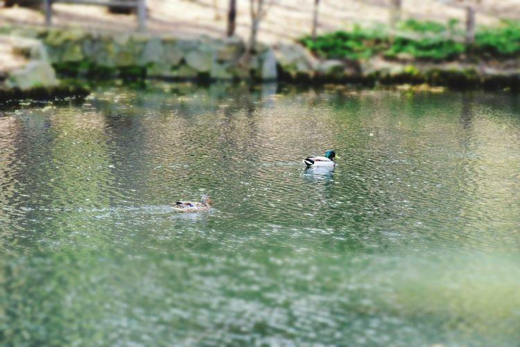 NIKON D5300 Nikon EyeEmNewHere Water Animals In The Wild Animal Themes Animal Bird Vertebrate Animal Wildlife