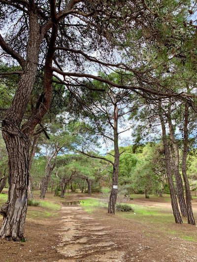 Side Manavgat Turkey Sidewalk Tree Plant Tranquility Growth Nature Beauty In Nature Tranquil Scene Land Day No People Scenics - Nature Non-urban Scene Outdoors Forest The Way Forward Direction Pine Tree Pine Woodland Landscape Diminishing Perspective Treelined Footpath Tree Trunk