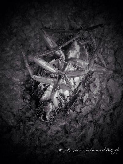AllCreaturesGreatAndSmall Masters_of_darkness Darkart My Nocturnal Illusions