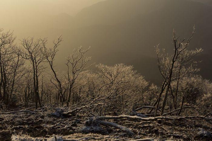 高見山 霧氷 高見山 Rime Nara