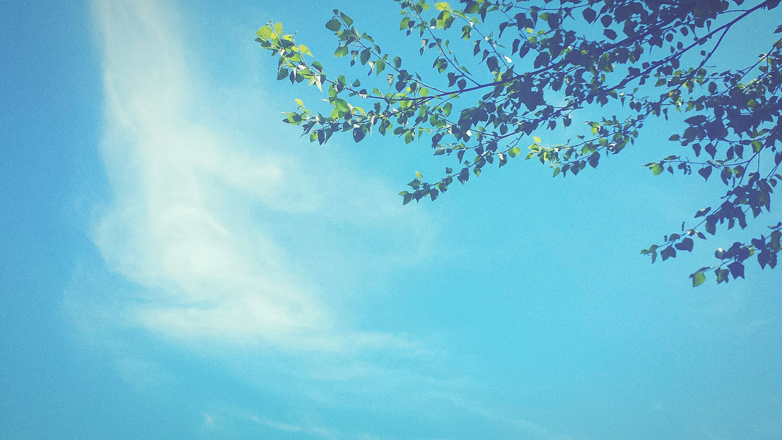 low angle view, blue, tree, growth, sky, beauty in nature, nature, tranquility, branch, leaf, scenics, day, tranquil scene, no people, outdoors, sunlight, freshness, cloud - sky, green color, idyllic