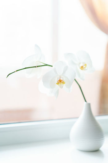 Gorgeous white orchid in a white vase Flowering Plant Vase Fragility Beauty In Nature Flower Vulnerability  Freshness Petal White Color Nature Focus On Foreground Inflorescence Flower Head Orchid No People Flower Arrangement Close-up Essentials Blossom Spring Flowers Spring Authentic Indoors  Aromatherapy Springtime Decadence