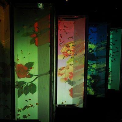 アートアクアリウム2014 金魚鑑賞で涼を取る♪ アートアクアリウム 金魚 夏 涼を取る 涼 江戸 コレド室町 artaquarium goldfish summer edo coredomuromachi