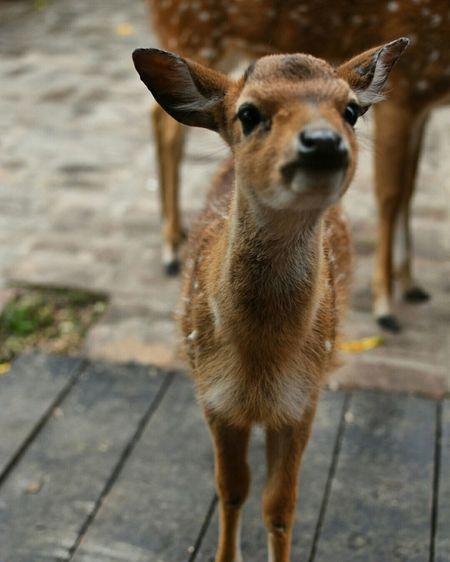 Bambi Farm Granja
