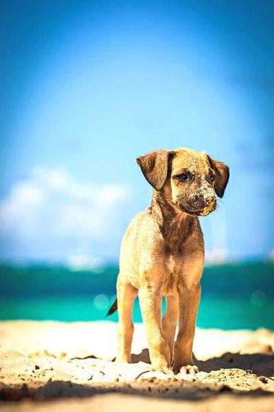 EyeEm Best Shots Eye4photography  Cute Dog Enjoying Life Malephotographerofthemonth cutest puppy on beach... punta cana 2015