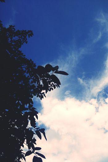 sky Bluesky