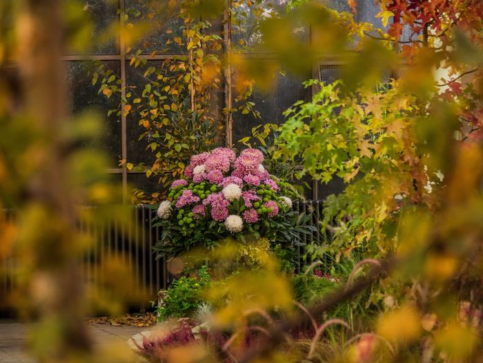 Flowers of autumn. Flower Nature Plant Growth Beauty In Nature Freshness Fragility No People Outdoors Leaf Day Close-up Horizontal Flower Head Frankfurt Palmengarten Autumn Frame Autumn Leaves Autumn Colors