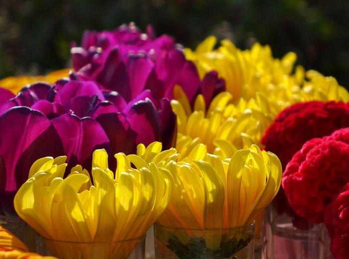 A flower arrangement with chrysanthemums illuminated by sunlight Flowering Plant Flower Plant Yellow Petal Flower Head Focus On Foreground Flower Arrangement Bouquet Purple Chrysanthemum Backlight Sunlight Flower Vase Inflorescence Translucent _Petals Translucent