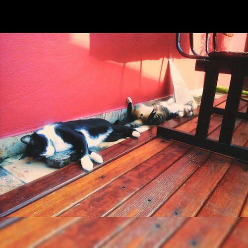 invejando a tranquilidade felina!! Lovecats Gatos Roxyeninho Roxy ninho cats meusgatinhos mycats