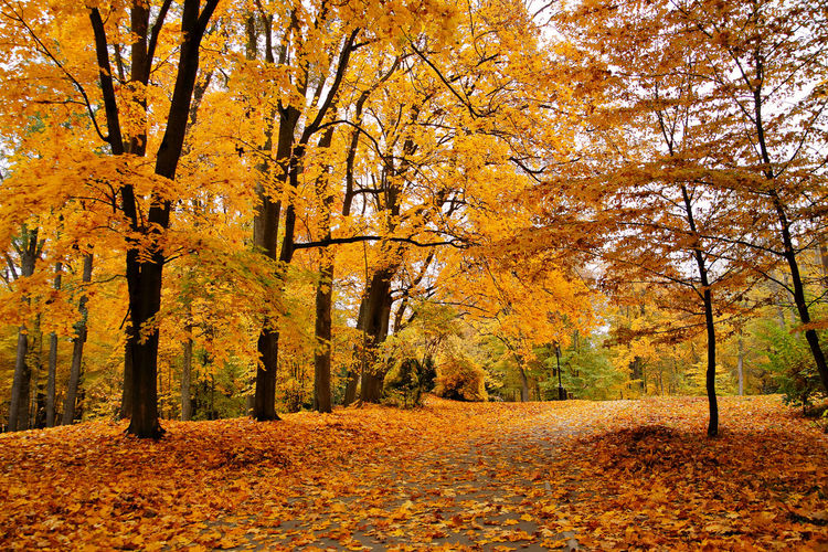 Yellow trees in park