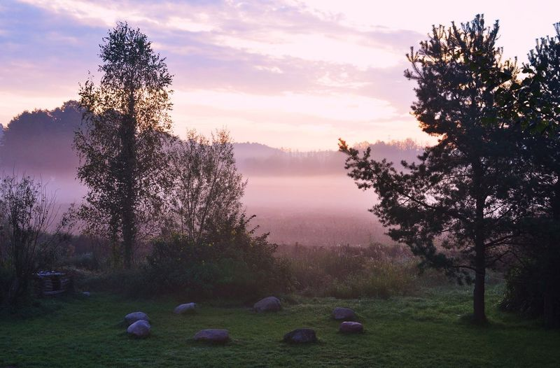 morning has broken Beauty In Nature Fog Foggy Foggy Morning Growth Idyllic Landscape Morning Morning Light Nature Scenics Sky Steinkreis Stone Circle Sunset Tranquil Scene Tranquility Tree
