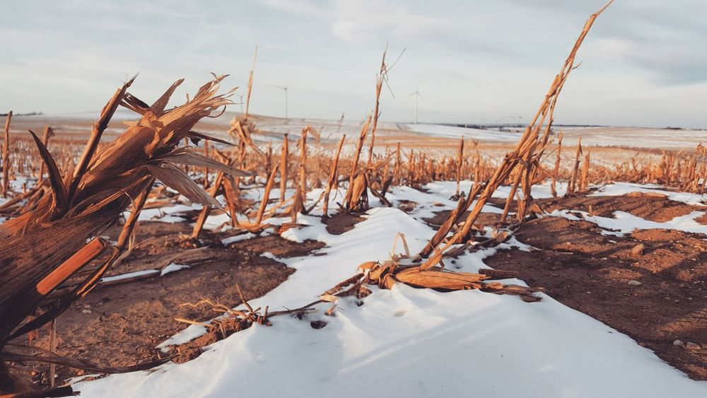 Winter Snow Cold Temperature Outdoors Sky Nature Frozen Ice Cloud - Sky Day No People Beauty In Nature Landscape Nature Reserve Cornfield Corn