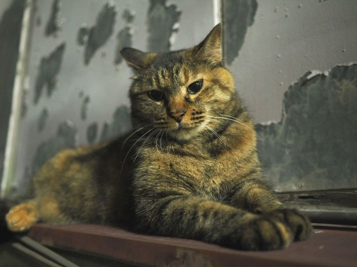 Domestic Cat Animal Sitting Single Focus Olympus Nightphotography Catphoto Catphotography Taking Photos Cat Single Forcus