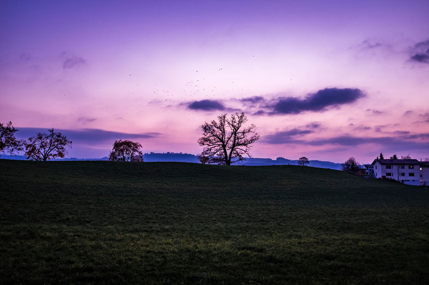 Sky Environment Cloud - Sky Landscape Beauty In Nature Plant Tree Land Field Scenics - Nature Tranquil Scene Nature Tranquility Sunset Grass Silhouette Night Non-urban Scene Outdoors No People Purple