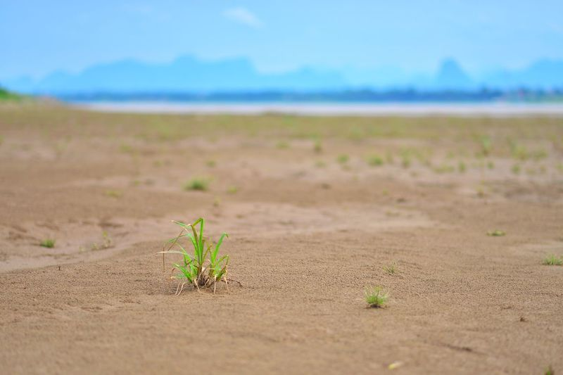 Plant on land against sky