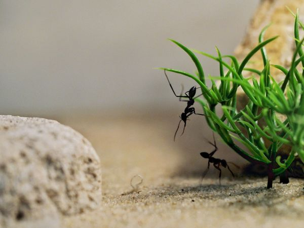 Ants' life 🐜 Insect Animal Themes Animals In The Wild Close-up One Animal Nature Animal Wildlife No People Close Up Ants Life Ant Photography Ants Tiny Creature Insect Photography Insects  Ant Life Nature Ant Pet Portraits