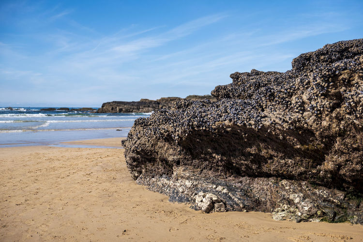 Cornwall Travel Destinations Travel Photography Landscape Mussels Mussels On Rock Godrevy Beach Ocean Sea And Sky Sea Sand Water Beach