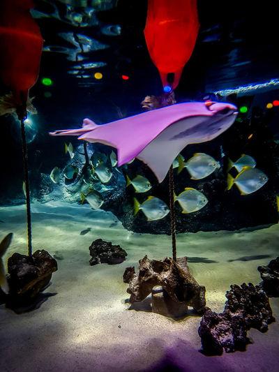 Beautiful Sea Life Aquarium Sealife Animal Themes Animal Wildlife Aquarium Aquarium Life Beauty In Nature Close-up Day Nature No People Sea Sea Life Sealifeaquarium Water