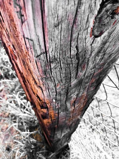 Burning wood Tree No People Wood - Material Plant Close-up Textured  Nature Day Tree Trunk Trunk Outdoors Focus On Foreground Growth Winter Beauty In Nature Pattern Bark Cold Temperature Rough