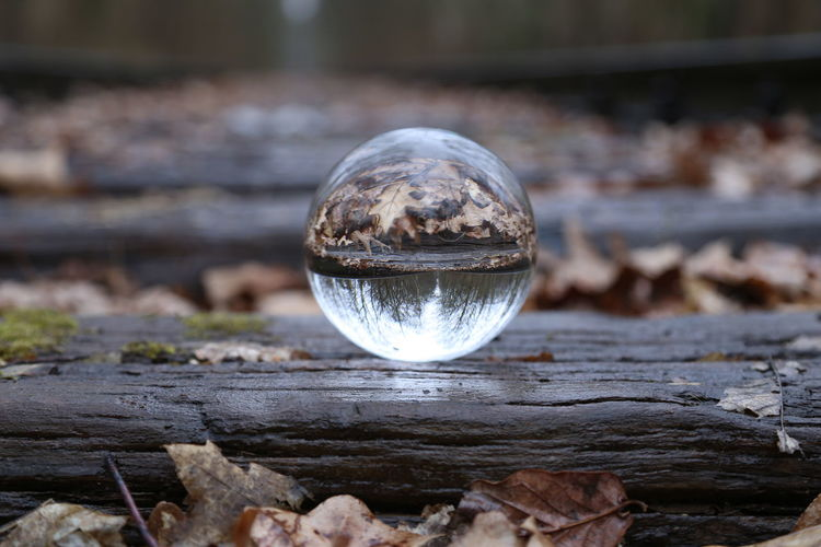 Reflection Sphere Crystal Ball Day Focus On Foreground Close-up No People Transparent Nature Glass - Material Outdoors Selective Focus Ball Wood - Material Single Object Tree Upside Down Water Shape Silver Colored