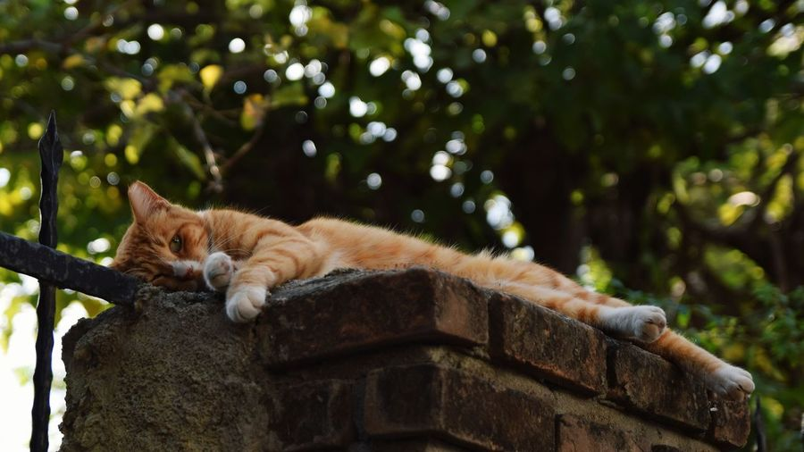 Cat relaxing on a wall