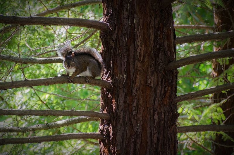 Why hello there, squirrel. Urban Nature Light And Shadow The Places I've Been Today Hiking Trees Nature EyeEm Best Shots