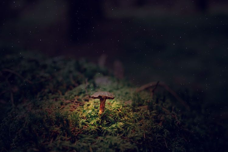 Mushrooms growing on field against sky at night