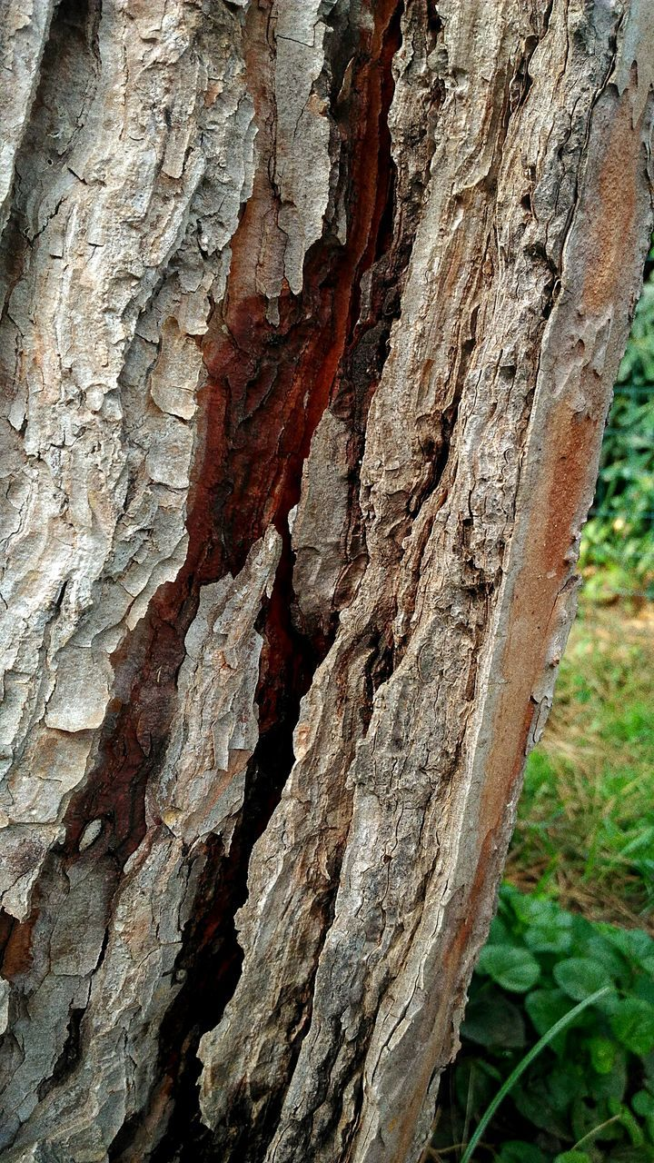 textured, close-up, no people, day, rough, wood - material, outdoors, nature, tree trunk, tree
