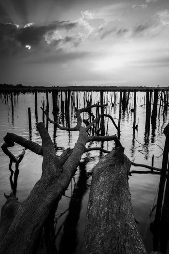 dead tree in the lake Beauty In Nature Cloud - Sky Day Driftwood Land Nature No People Non-urban Scene Outdoors Post Reflection Scenics - Nature Sea Sky Tranquil Scene Tranquility Tree Water Wood Wood - Material Wooden Post